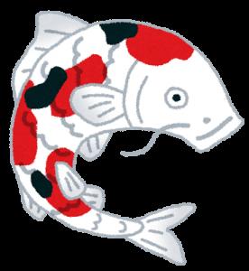 fish_nishikigoi