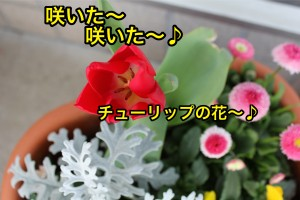 IMG_6420