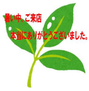 wakaba_shinryoku
