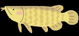 fish_arowana