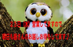 owl-845131_960_720