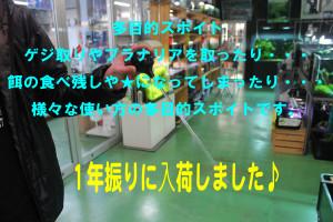 IMG_8530