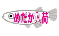 fish_medaka_character