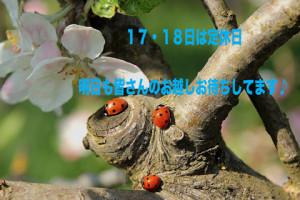 ladybug-722783_960_720