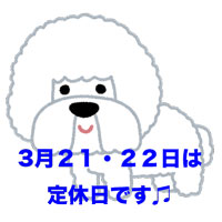 dog_Bichon_Frise