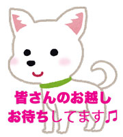 dog_chihuahua