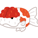 fish_kingyo_sakuranishiki